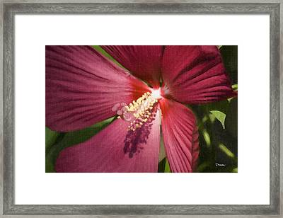 Red Disco Belle Hibiscus Painting Framed Print by Teresa Mucha