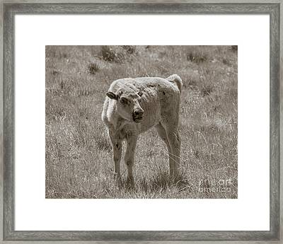 Framed Print featuring the photograph Red Dog Buffalo Calf by Rebecca Margraf