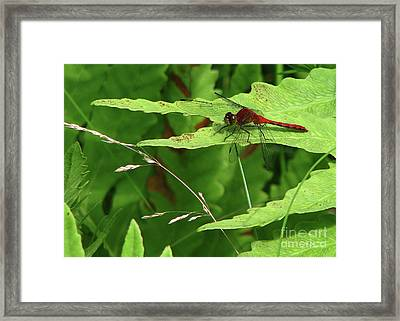 Red Dragon Framed Print by Deborah Johnson