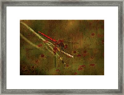 Red Dragonfly Dining Framed Print by Bonnie Bruno