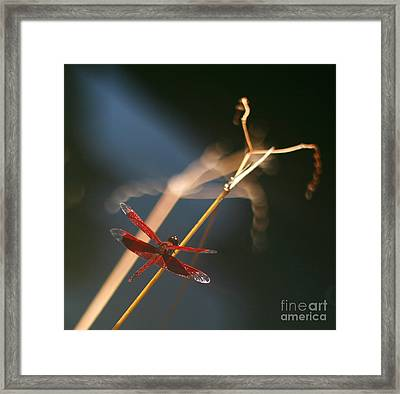 Red Dragonfly Framed Print by Mike Reid