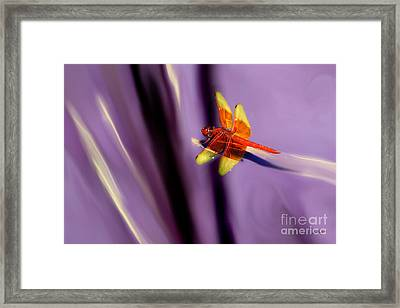 Red Dragonfly On Purple Background Framed Print