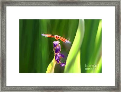 Red Dragonfly On Purple Flower Framed Print