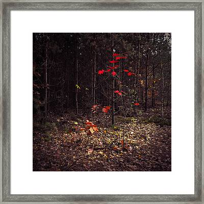 Red Drops Framed Print