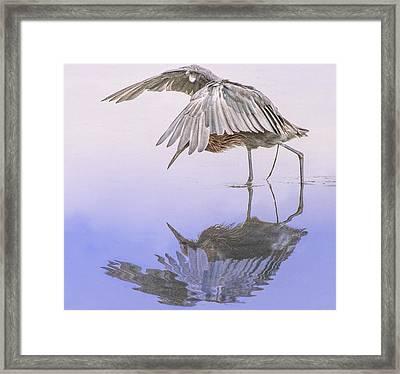 Red Egret Fishing Prance Dance Framed Print