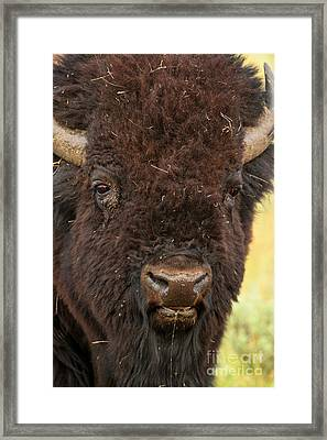 Red-eye Framed Print