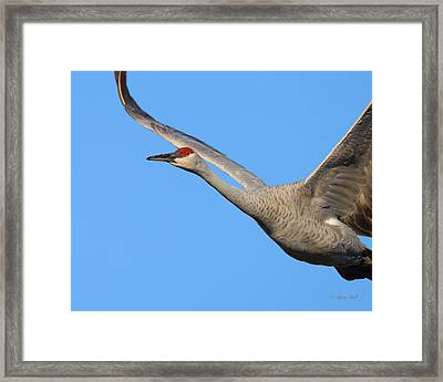 Framed Print featuring the photograph Red Eye Flight by Gerry Sibell