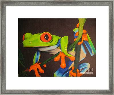 Red Eye Tree Frog Framed Print by Brian Schuster