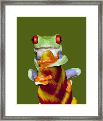 Red Eyed Delight Framed Print by Janet Fikar