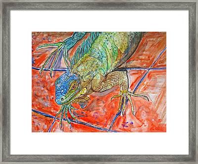 Red Eyed Iguana Framed Print by Kelly     ZumBerge