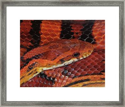 Red Eyed Snake Framed Print