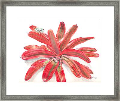 Red-eyed Tree Frog On Bromeliad Framed Print