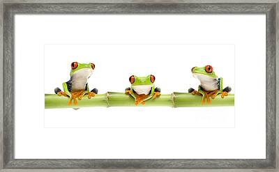Red-eyed Treefrogs Framed Print by Mark Bowler and Photo Researchers