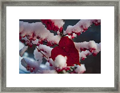 Red Fall Leaf On Snowy Red Berries Framed Print