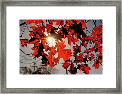 Red Fall Leaves Framed Print