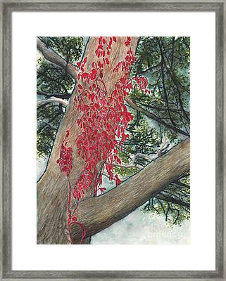 Red Fall Vines On Big Old Tree Framed Print