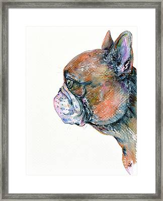 Red Fawn Frenchie Framed Print