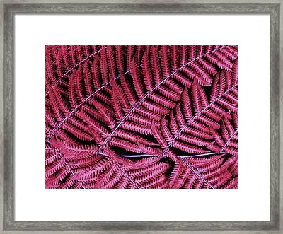 Red Fern Framed Print