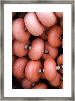 Red Fishing Net Floats Framed Print by Frank Tschakert