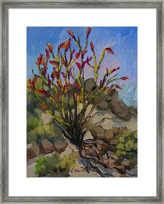 Red Flame Ocotillo 5 Framed Print