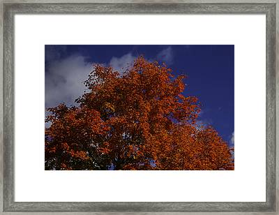 Red Flaming Maple Tree Framed Print by Garry Gay