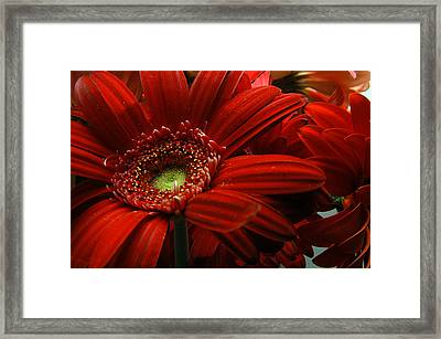 Red Floral Framed Print by Clayton Bruster