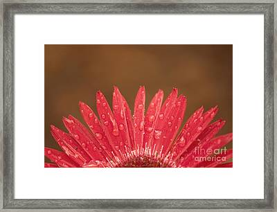 Red Flower 1 Of 2 Framed Print