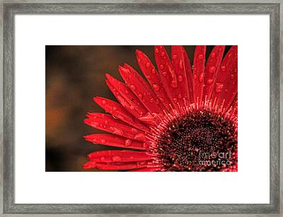 Red Flower 2 Of 2 Framed Print