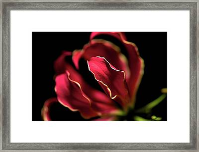 Red Flower 3 Framed Print by Sheryl Thomas