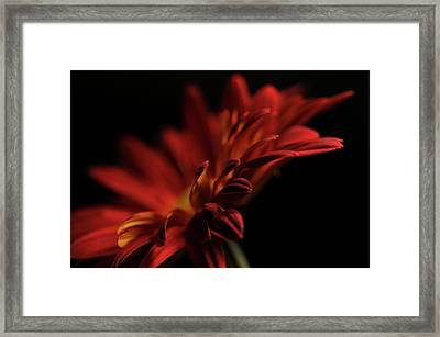 Red Flower 5 Framed Print by Sheryl Thomas