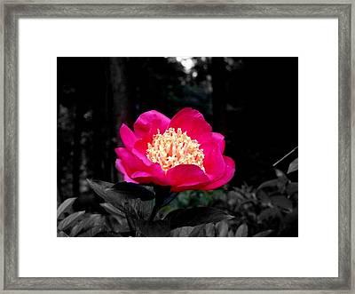 Red Flower Framed Print by Aron Chervin