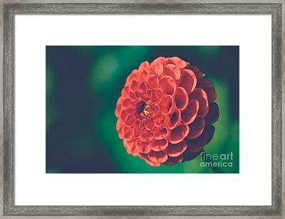 Red Flower Against Greenery Framed Print