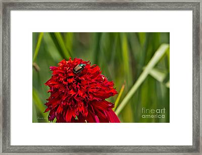 Red Flower And Beetle Framed Print