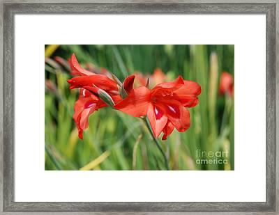 Red Flower Framed Print by Jan Daniels
