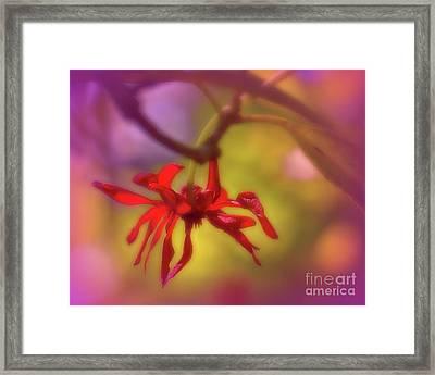 Red Flower Framed Print by Judi Bagwell