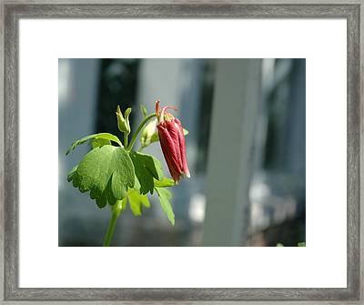 Red Flower Framed Print by Mark Platt