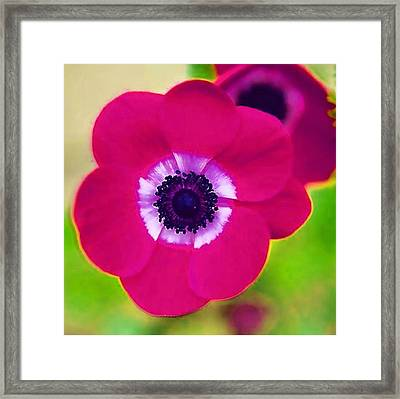 Red Flower Framed Print by Mitchell Gibson