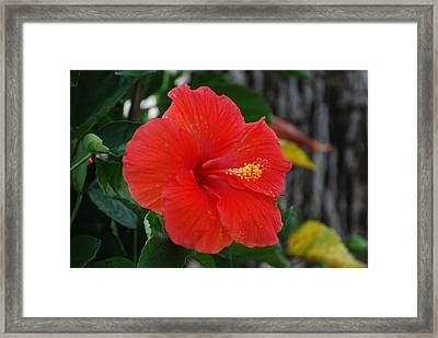 Framed Print featuring the photograph Red Flower by Rob Hans