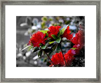 Red Flowers Framed Print by Aron Chervin