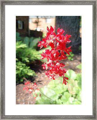 Framed Print featuring the photograph Red Flowers by Beth Akerman