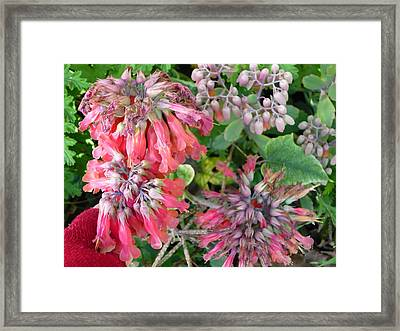 Red Flowers Like Snowflakes Framed Print by Adrianne Wood