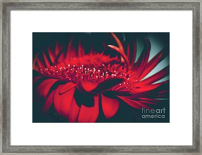 Red Flowers Parametric Framed Print by Sharon Mau