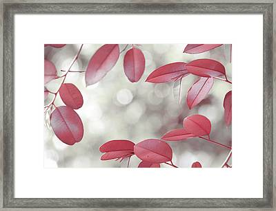 Red Foliage. Silver Light Framed Print