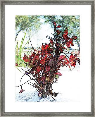 Red For The Winter Framed Print by James Granberry
