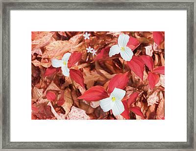 Red Forest White Flowers Framed Print