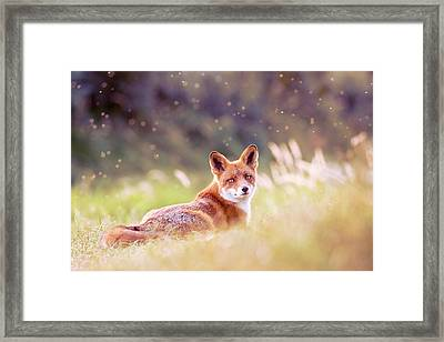 Red Fox And The Fairy Dust Framed Print by Roeselien Raimond