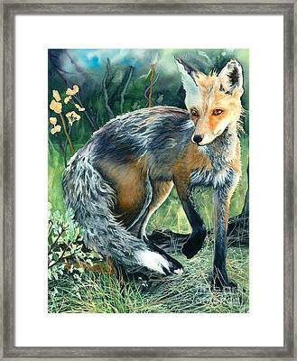 Red Fox- Caught In The Moment Framed Print by Barbara Jewell