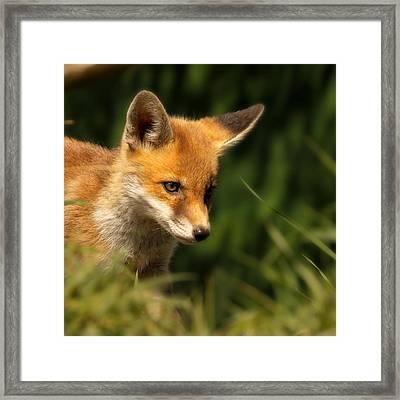 Red Fox Cub In The Grass Framed Print by Chris Jolley