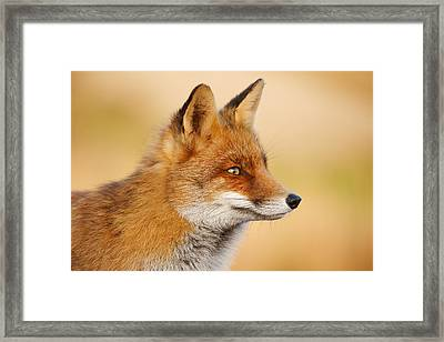 Red Fox Face Framed Print by Roeselien Raimond