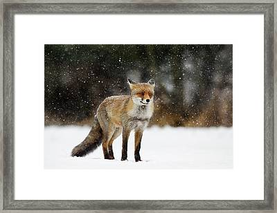 Red Fox In A Blizzard Framed Print by Roeselien Raimond